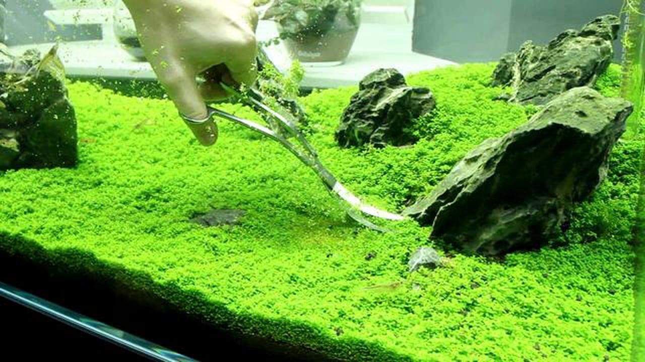 L'importanza delle alghe nei prodotti cosmetici