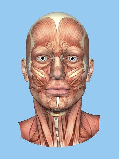 La biostimolazione neuro-muscolare